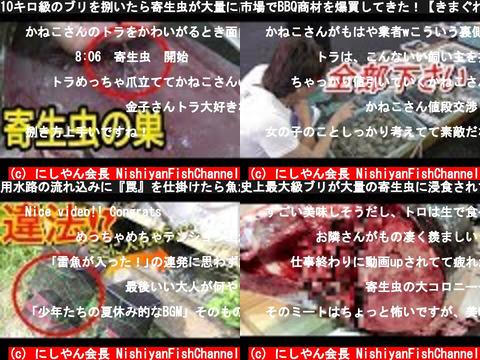 にしやん会長 NishiyanFishChannel(おすすめch紹介)