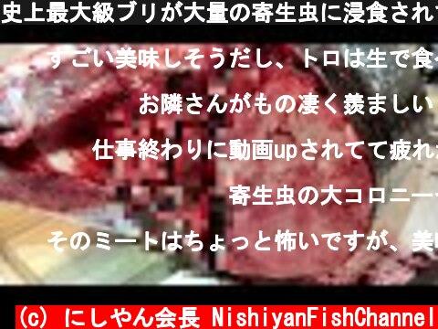 史上最大級ブリが大量の寄生虫に浸食されていた件  (c) にしやん会長 NishiyanFishChannel