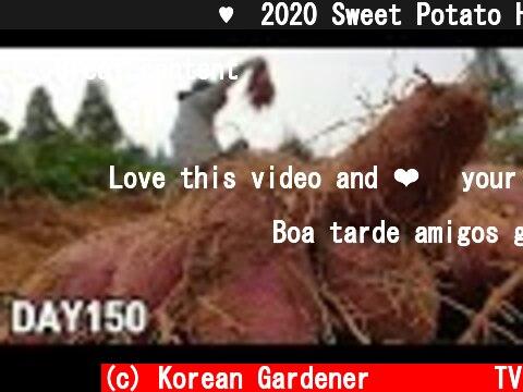노지 고구마 수확♥ㅣ2020 Sweet Potato Harvest  (c) Korean Gardener 초록식물TV