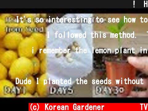 레몬 사 먹고 공짜로 모종 얻는 방법!ㅣHow to Grow a Lemon Tree from Seed  (c) Korean Gardener 초록식물TV
