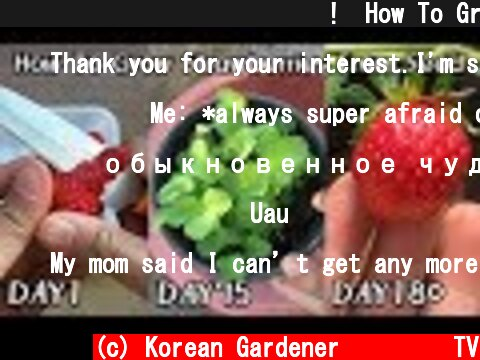 공짜로 딸기 모종 얻는 방법!ㅣHow To Grow Strawberries From Seed  (c) Korean Gardener 초록식물TV