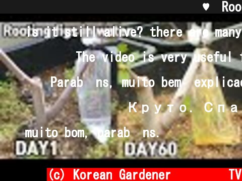 심심해서 해본 무화과 뿌리 내리기♥ㅣRooting figs in water  (c) Korean Gardener 초록식물TV