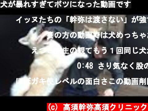 犬が暴れすぎてボツになった動画です  (c) 高須幹弥高須クリニック
