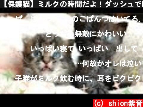 【保護猫】ミルクの時間だよ!ダッシュで駆け寄ってくる黒猫ちゃんと、のんびり屋なキジトラちゃん【生後約22日】 It's time for  milk!  (c) shion紫音