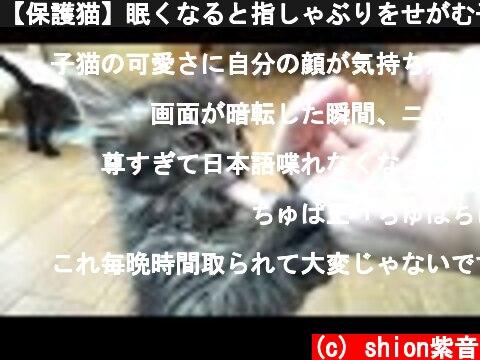 【保護猫】眠くなると指しゃぶりをせがむ子猫 【生後約55日】&アルくんお気に入りYouTube動画を鑑賞  kitten sucking my finger  (c) shion紫音
