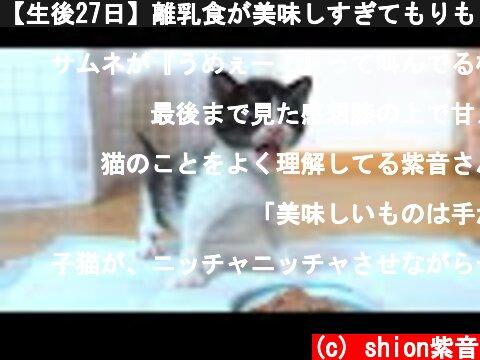 【生後27日】離乳食が美味しすぎてもりもり食べる子猫【保護子猫】  (c) shion紫音