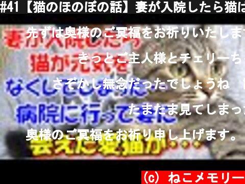 #41【猫のほのぼの話】妻が入院したら猫は元気をなくしてしまった。病院に行って妻に会えた愛猫は・・・  (c) ねこメモリー