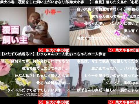 柴犬小春のB面(おすすめch紹介)