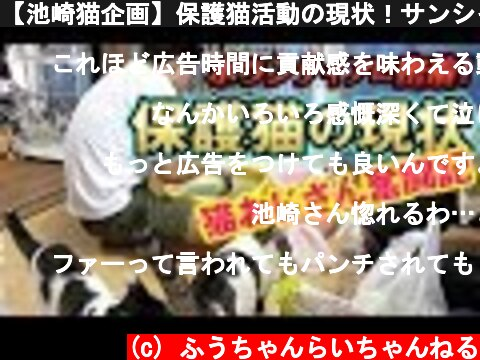 【池崎猫企画】保護猫活動の現状!サンシャイン池崎のボランティアに密着!  (c) ふうちゃんらいちゃんねる