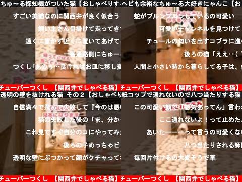 ニャンチューバーつくし 【関西弁でしゃべる猫】(おすすめch紹介)
