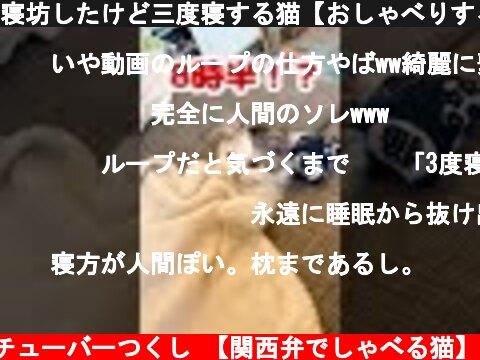 関西 弁 で しゃべる 猫