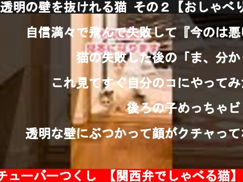 透明の壁を抜けれる猫 その2【おしゃべりする猫】 #Shorts  (c) ニャンチューバーつくし 【関西弁でしゃべる猫】