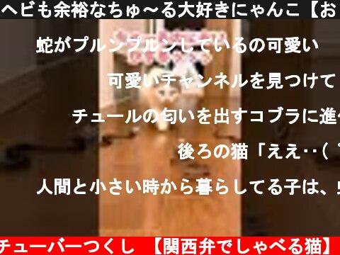 ヘビも余裕なちゅ~る大好きにゃんこ【おしゃべりする猫】 #Shorts  (c) ニャンチューバーつくし 【関西弁でしゃべる猫】