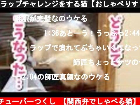 ラップチャレンジをする猫【おしゃべりする猫】  (c) ニャンチューバーつくし 【関西弁でしゃべる猫】
