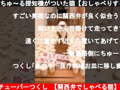 ちゅ~る探知機がついた猫【おしゃべりする子猫】 #Shorts  (c) ニャンチューバーつくし 【関西弁でしゃべる猫】