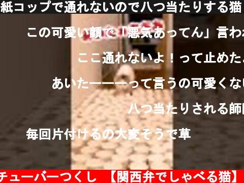 紙コップで通れないので八つ当たりする猫【おしゃべりする猫】 #Shorts  (c) ニャンチューバーつくし 【関西弁でしゃべる猫】