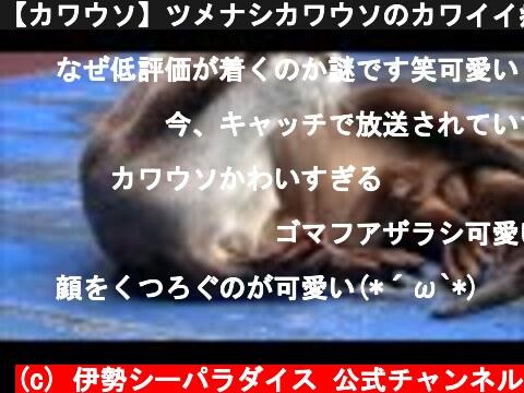 【カワウソ】ツメナシカワウソのカワイイ癖 Cute habit of Xenopus otter.(伊勢シーパラダイス)  (c) 伊勢シーパラダイス 公式チャンネル