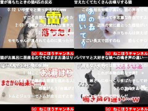 ねこほうチャンネル (おすすめch紹介)